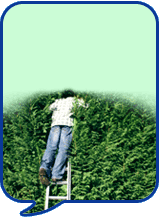 image of man cutting hedge